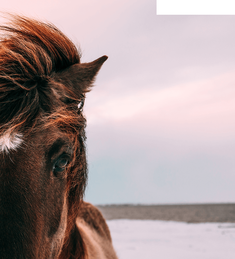 Jonathan Bean Freelance UX Designer & Developer - Horse
